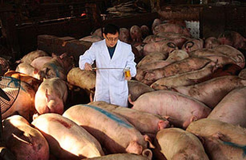 Cách chọn thịt lợn làm giò lụa chuẩn nhất mà bạn nên biết