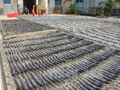 Phương pháp bảo quản thủy sản sấy nào đang dẫn đầu xu hướng